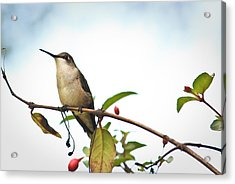 Acrylic Print featuring the photograph Hummingbird 2 by Tammy Schneider