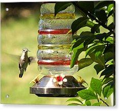 Acrylic Print featuring the photograph Hummingbird - 2 by Teresa Schomig