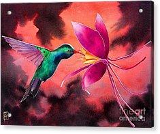 Hummingbird And Columbine Acrylic Print