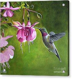 Hummingbird And Fuschia Acrylic Print