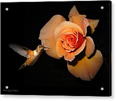 Hummingbird And Orange Rose Acrylic Print