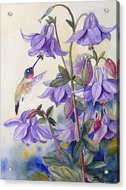 Hummingbird And Purple Columbine Acrylic Print