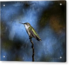 Acrylic Print featuring the digital art Hummingbird Beauty by J Larry Walker