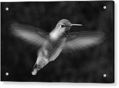 Hummingbird Acrylic Print by Ben and Raisa Gertsberg
