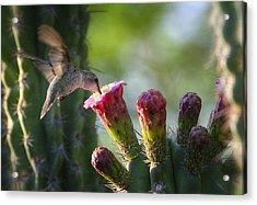 Hummingbird Breakfast Southwest Style  Acrylic Print