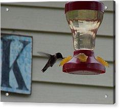 Hummingbird Breakfast Acrylic Print