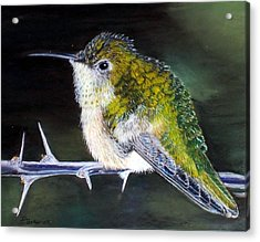 Acrylic Print featuring the painting Hummingbird by Debbie Baker