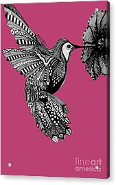 Hummingbird Flight 5 Acrylic Print by Karen Larter