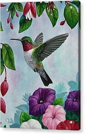 Hummingbird Greeting Card 1 Acrylic Print by Crista Forest