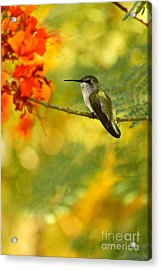 Hummingbird In A Painting Acrylic Print by Michael Cinnamond