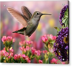 Hummingbird In Colorful Garden Acrylic Print by William Lee