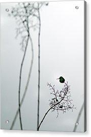 Hummingbird In Fog 2 Acrylic Print
