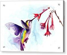 Hummingbird In Red Flowers Watercolor Acrylic Print by Tiberiu Soos