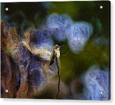 Hummingbird In The Cosmos Acrylic Print by J Larry Walker