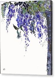 Hummingbird In Wisteria  Acrylic Print by Sibby S