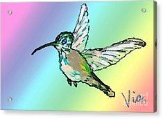 Hummingbird  Acrylic Print by Judy Via-Wolff