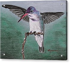 Acrylic Print featuring the drawing Hummingbird by Kume Bryant