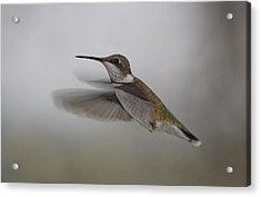 Acrylic Print featuring the photograph Hummingbird  by Leticia Latocki
