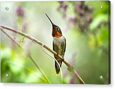 Hummingbird Looking For Love Acrylic Print