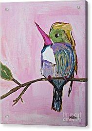 Hummingbird No. 1 Acrylic Print