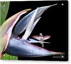 Acrylic Print featuring the photograph Hummingbird Paradise by Jennie Breeze