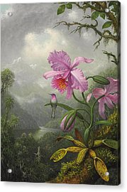 Hummingbird Perched On The Orchid Plant Acrylic Print