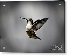 Hummingbird Acrylic Print by Savannah Gibbs