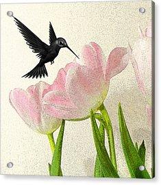 Hummingbird Acrylic Print by Sharon Lisa Clarke