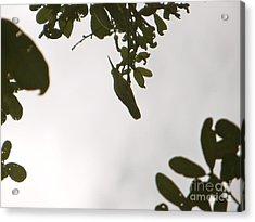 Acrylic Print featuring the photograph Hummingbird Silhouette 1 by Joy Hardee