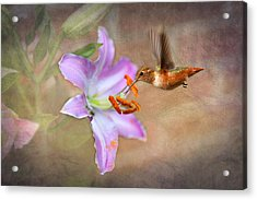 Hummingbird Sweets Acrylic Print by Mary Timman