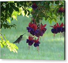 Acrylic Print featuring the photograph Hummingbird by Teresa Schomig