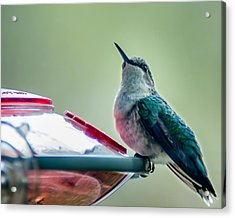Acrylic Print featuring the photograph Hummingbird by Todd Soderstrom