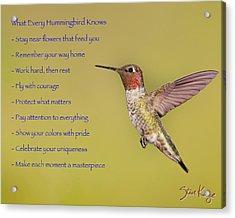 Hummingbird Wisdom Acrylic Print