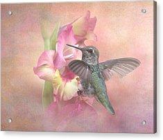 Hummingbirds Gladiola Acrylic Print