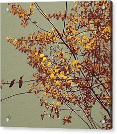 Hummingbirds On Yellow Tree Acrylic Print