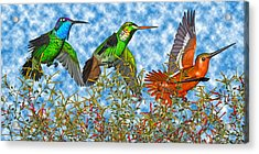 Hummingbirds Two Of Two Acrylic Print by Betsy Knapp