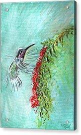 Hummingbird Bird Acrylic Print by Remy Francis