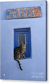Humorous Cat Sign Acrylic Print by Jean-Louis Klein and Marie-Luce Hubert