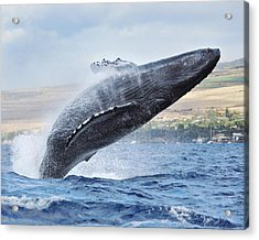 Humpback Whale Acrylic Print by M Swiet Productions