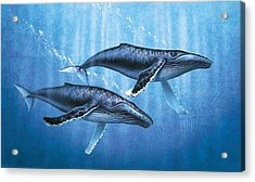 Humpback Whales Acrylic Print by JQ Licensing