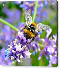 Hungry Bee Acrylic Print