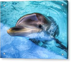Acrylic Print featuring the photograph Hungry Dolphin by Tim Stanley