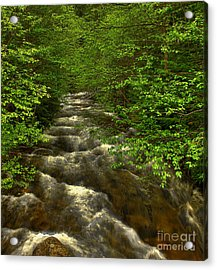 Hunt Creek Foilage Acrylic Print