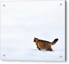 Hunter At Work Acrylic Print by Theresa Tahara