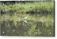 Hunter Reflected 2 Acrylic Print by Mark Minier