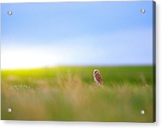 Acrylic Print featuring the photograph Hunting Alone by Kadek Susanto