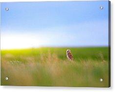 Hunting Alone Acrylic Print