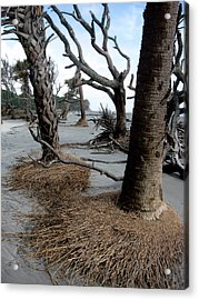 Hunting Island - 4 Acrylic Print by Ellen Tully