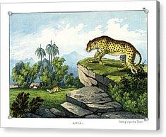 Hunting Leopard Acrylic Print by Splendid Art Prints