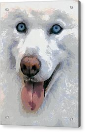Acrylic Print featuring the painting Husky by Georgi Dimitrov